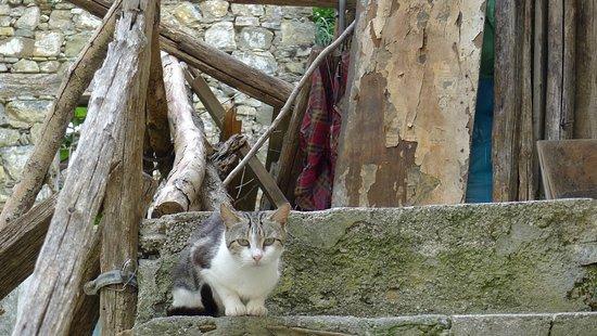 Roscigno, Italy: жительница заброшенного города