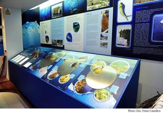 Dwejra Marine Environmental Education Centre