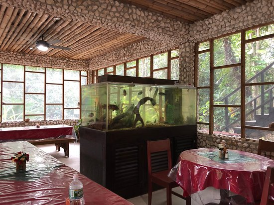 Belize Zoo Jungle Lodge/Tropical Education Center: Dining room