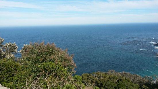 Cape Town Fynbos Experience