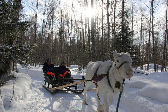 Reindeer ride in Sea Lapland