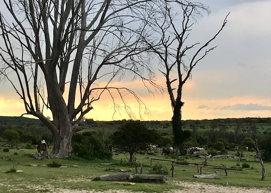 Waterberg, South Africa: where the horses live