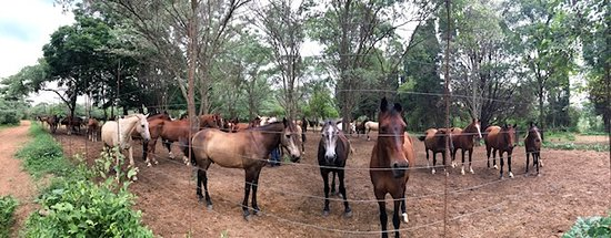Waterberg, South Africa: where the horses come / when they want to / to feed or be picked up for a ride