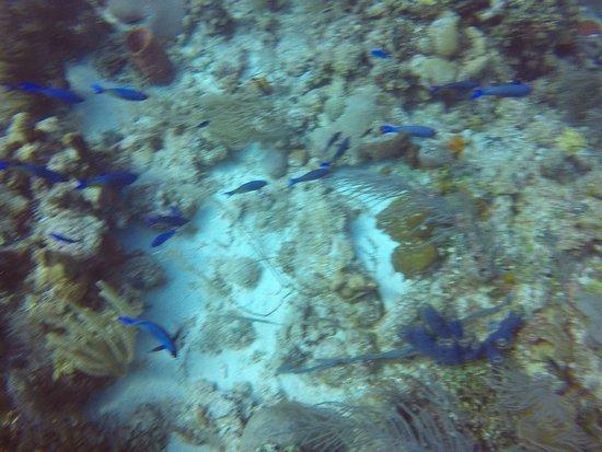 Belize Dive Excursions