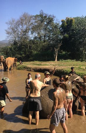 Half-Day Morning Visit to Elephant Jungle Sanctuary in Chiang Mai: The mud bathing of the elephants was so much fun....this elephant was pregnant and was radiating heat....I'm sure the mud felt so cool to her.
