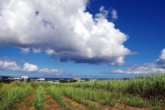 ออนนะ-ซง , ญี่ปุ่น: サトウキビ畑から海を臨む