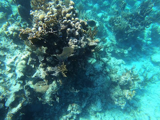 Private Half Day Trip: coral