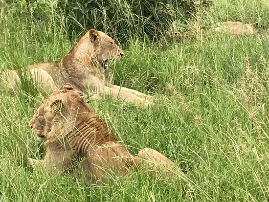 Manyeleti Game Reserve Φωτογραφία