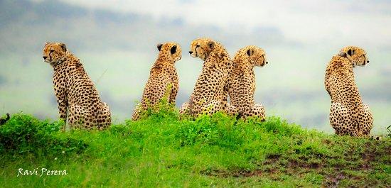 SerendipityNtravel Safaris