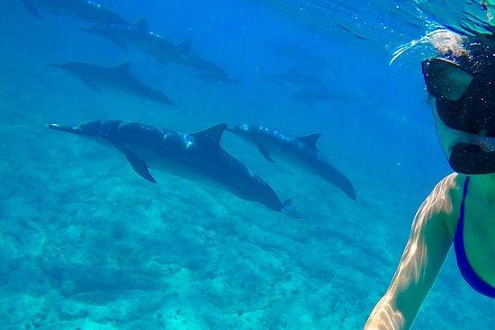 Kona Wild Dolphin Snorkel y arrecife...