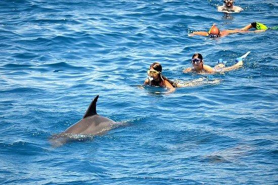 Dolphin House Meeresausflug Hurghada