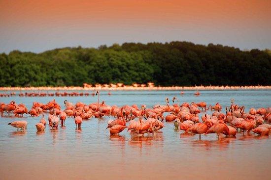 Rio Lagartos, Coloradas & Ek Balam Cenote fra Playa del Carmen