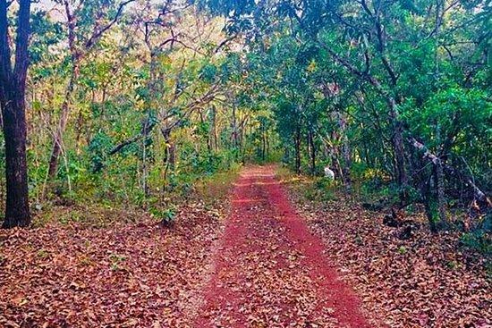 Utforsk den menneskeskapte skogen i...