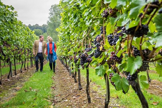 Hampshire Vineyards Tour