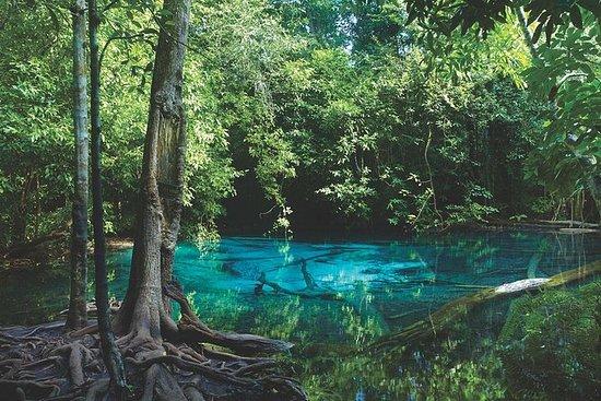 Ao Thalane - Oppdag mangrove livet