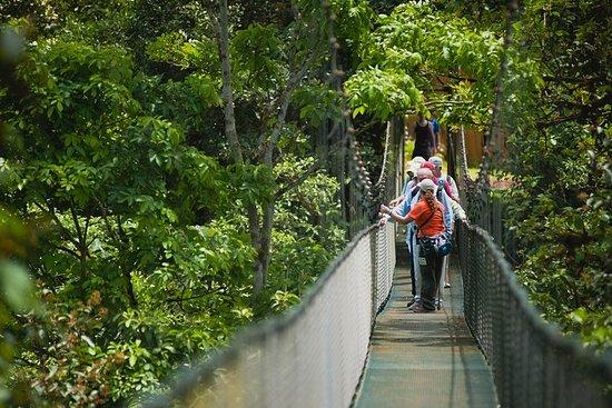 Hanging Bridges Adventure From San...