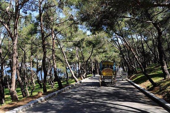 王子的岛屿之旅与辉腾在伊斯坦布尔