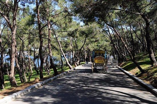 王子的岛屿之旅与辉腾在伊斯坦布尔与午餐