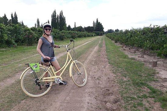 Ciclismo entre las mejores bodegas de...