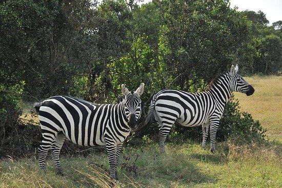 5 days Ol Pejeta And Masai Mara Safari