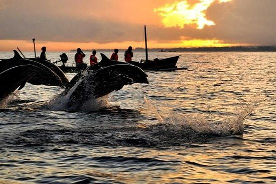 Bali Dolphin Tour Package Combination...