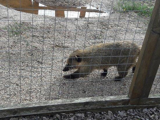 Zoo Parc des félins, les Trois Vallées: SEPTEMBRE 2018