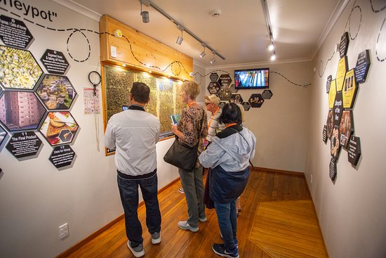 Our interactive bee wall lets you have a sneak peek inside the world of a honey bee.