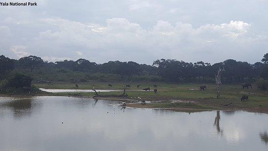 Kerala Travels Interserve: Yala National Park, Sri Lanks.