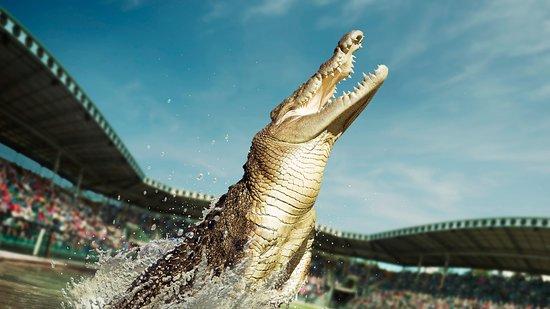 Croc Tours