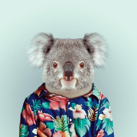 Koalatabon