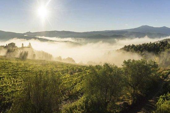 Viaggio del vino Brunello di