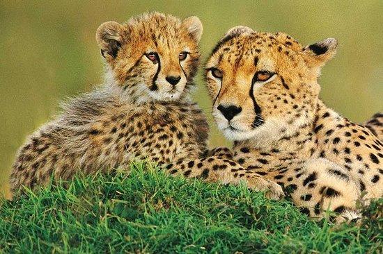 4 dager Amboseli & Tsavo