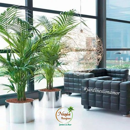 If you find yourself on vacation season. Come here Nayon town 30 minutes of Quito´s airport and  take away  an ecuadorian palm tree to your home. Further información ➡️http://bit.ly/2BzEpId