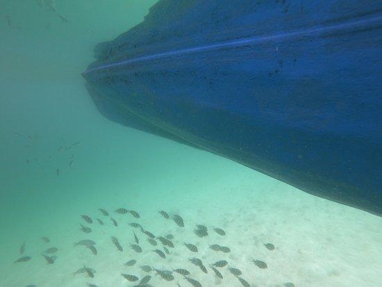 Gita di un giorno a Khasab, penisola del Musandam e crociera in sambuco da Dubai: a lot of fishes