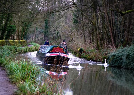 Swans and barge on the Cromford Canal