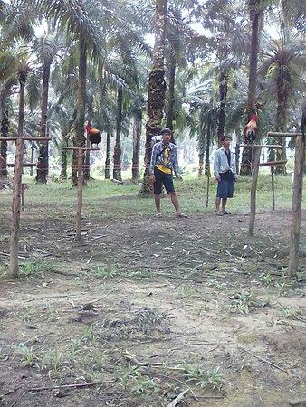 Tha Sae, Tajlandia: Namtok Kapo Forest Park