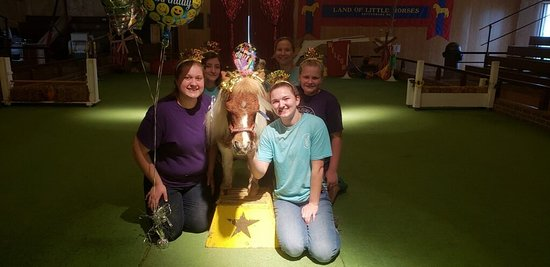 Land of Little Horses: Meet our staff and the lovable Columbus!