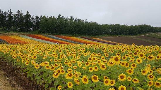 Yoshida Tomita Farm