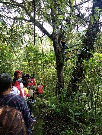 Puri Lumbung Cottages, Restaurant and Spa - Munduk Village: Orchids Conservation at Tamblingan Rain Forest