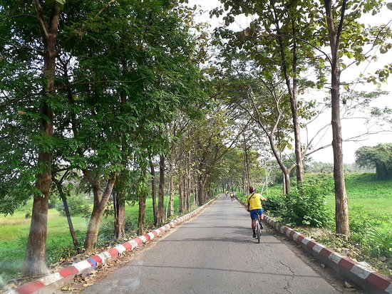 """"""" Pedaling in green environment """""""