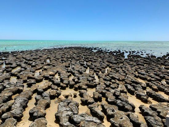 ハメリン プール海洋自然保護区