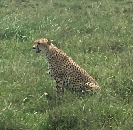 Safari Travel Deals (Arusha) - 2019 All You Need to Know