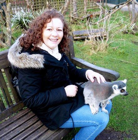 My birthday treat, feeding the Lemurs