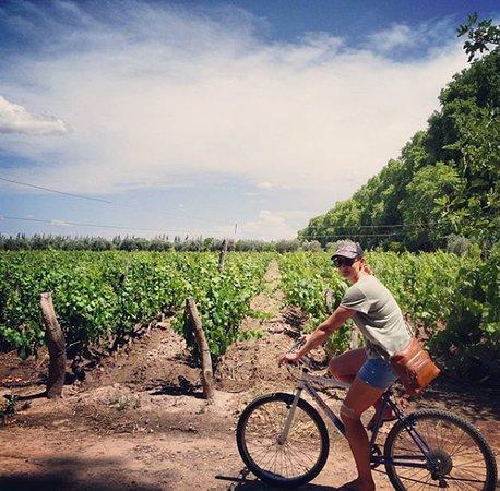 Vení a disfrutar de Maipú con amigos entre viñedos, olivos y las mejores bodegas de Mendoza