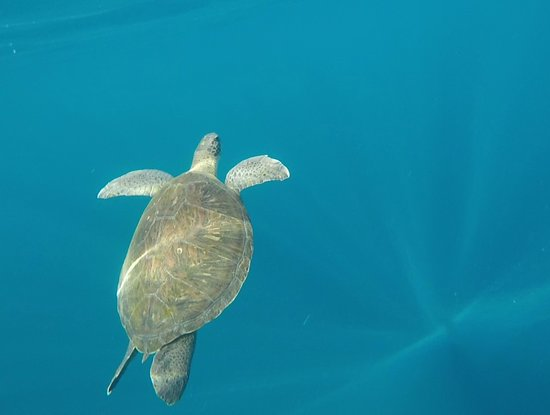 Tenerife snorkelling and kayaking: Tortue qui remonte
