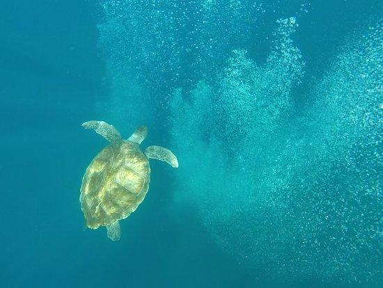 Tenerife snorkelling and kayaking: Tortue qui joue avec les bulles des plongeurs