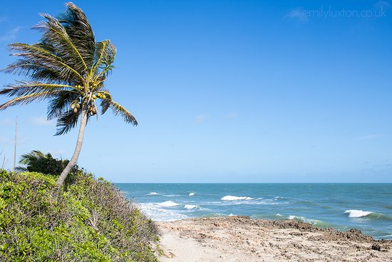 Hutchinson Island in Florida has some of the most amazing beaches I've ever seen!