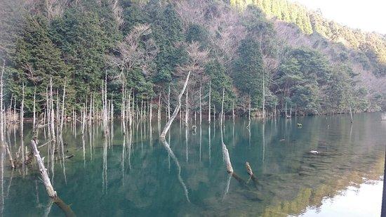 Ichinomatasakura Park