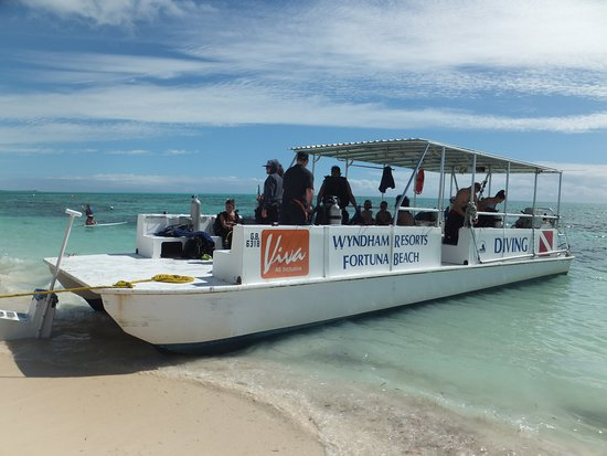 Viva Wyndham Fortuna Beach - An All-Inclusive Resort: The Reef Oasis dive boat.
