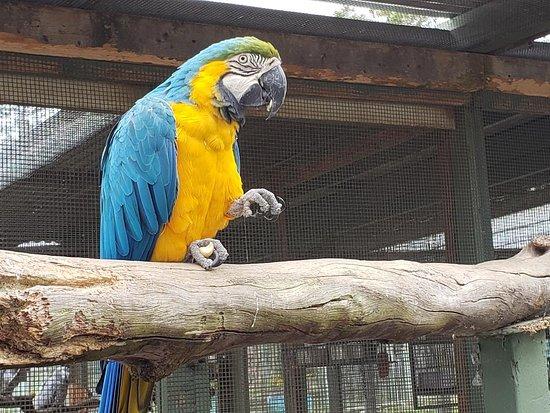 Parrots in Paradise Sanctuary